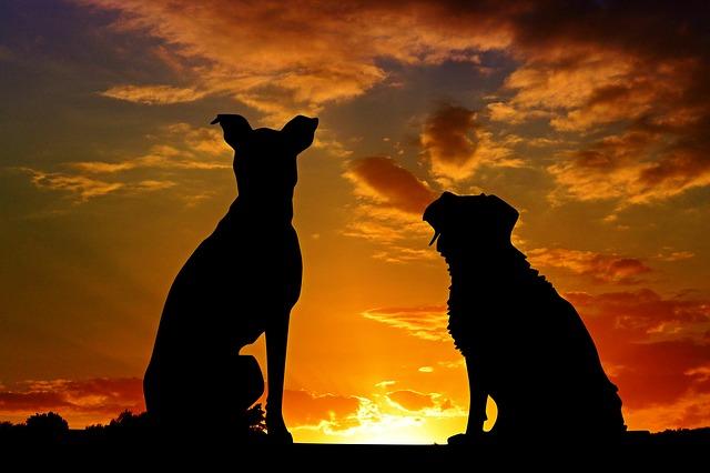 勿讓惡犬當道:狗主遵守《危險狗隻規例》